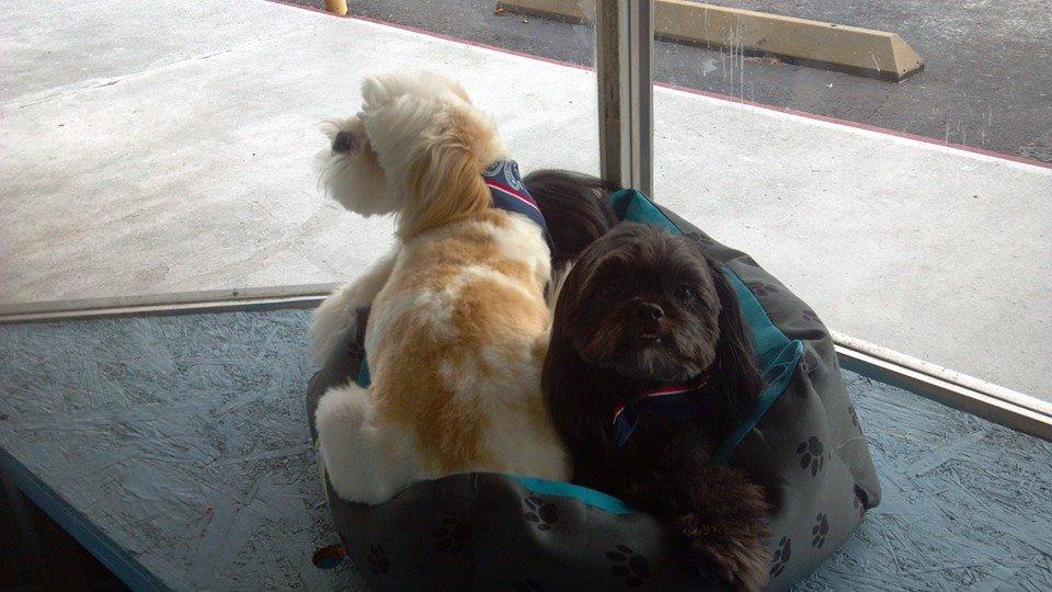 dogs in window